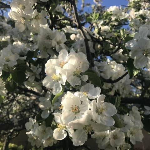 Pronájem velmi dobře zavedeného květinářství
